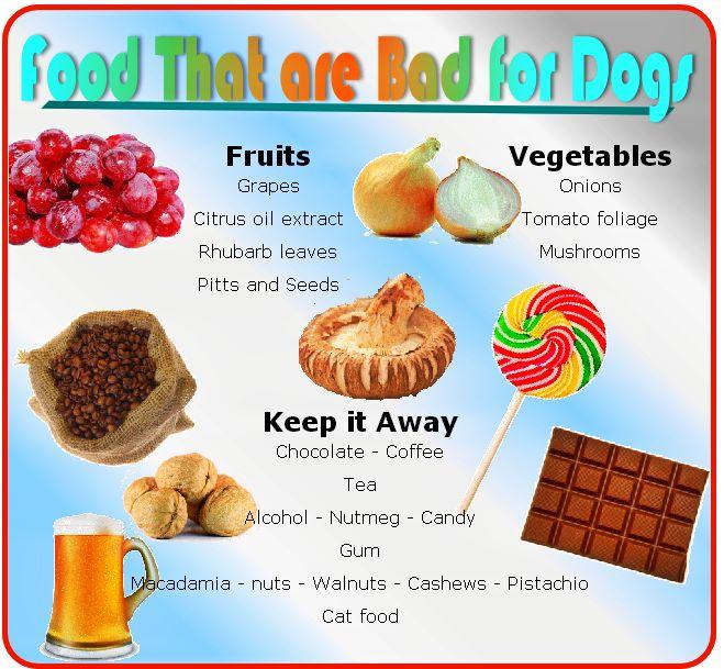 Ποιες είναι οι βλαβερές τροφές για σκύλους;