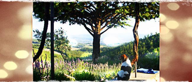 My Tuscany Holiday Villa Tips and Review