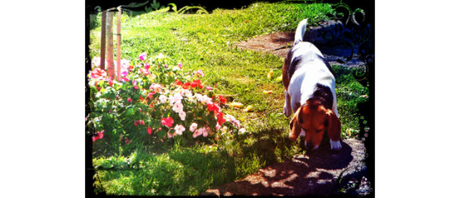 Spring is in the Air...Tips for a Spring Squeaky Dog