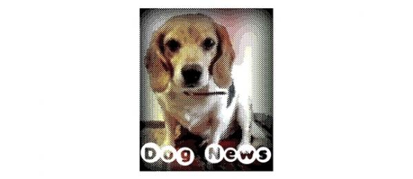Dog Travel News