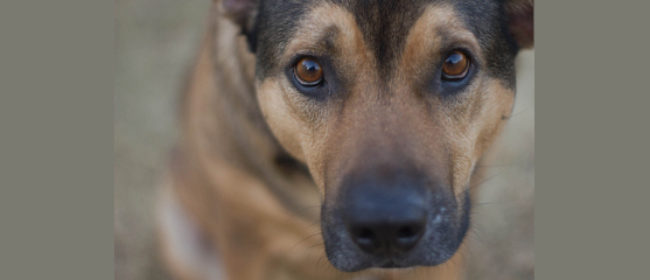 Are You Ready to Get A Rescue Dog?