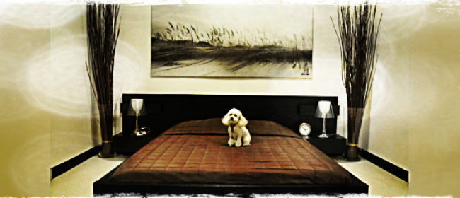 D Pet Hotels Luxury Coast to Coast
