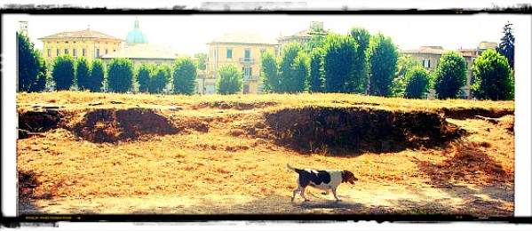 Dog friendly Lucca