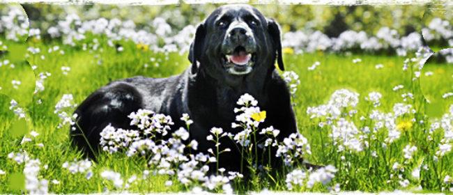 Best Dog Food Uk By Veterinarians