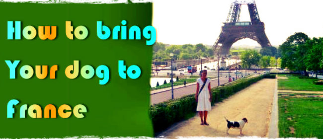 How to bring your dog to France