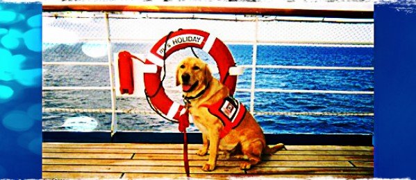 Everything you need to know about taking your pet on a Cruise