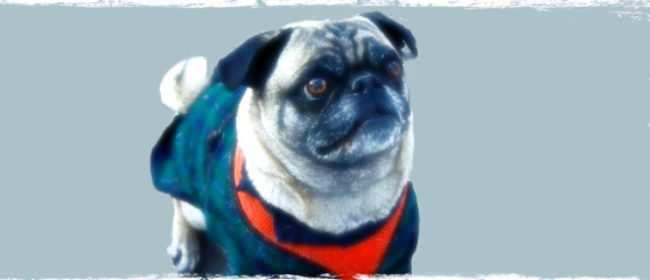 Dog Clothes: Essential Protection for Your Dog this Winter