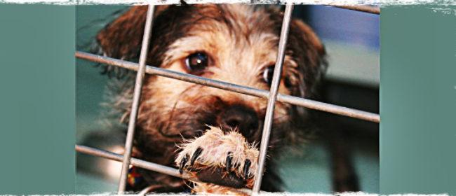 John Paul Pet Announces National Campaign for Survivors of Hurricane Sandy