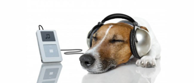 Can Music Help Deal with Canine Anxiety?