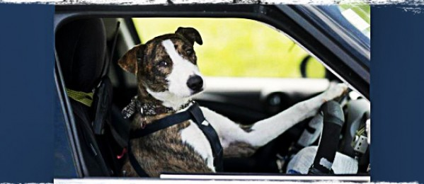 Dogs Driving Cars: New Zealand SPCA Puts Canines Behind The Wheel (VIDEO)