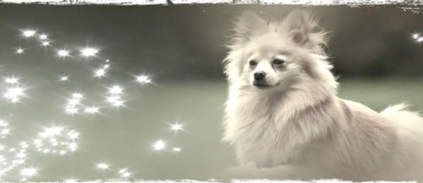Get the Top Dog Model look