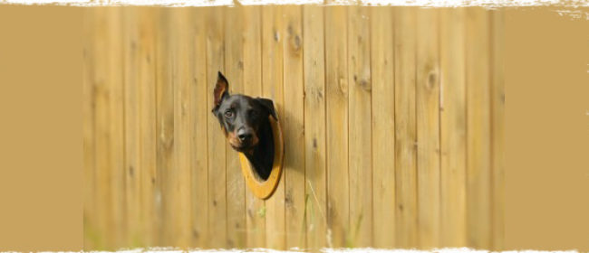 How to Dog Proof Your Property