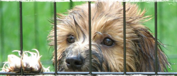 What We Can Do To Shut Down Puppy Mills