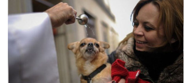 Pets head to Vatican and Spain churches for blessing