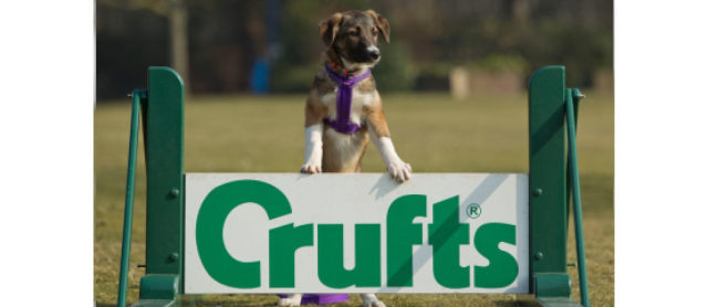 All About Crufts! -March 7th to March 10th 2013