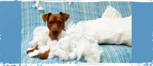 Help my Puppy is Driving Me Crazy...6 Tips to Avoid Puppy Stress