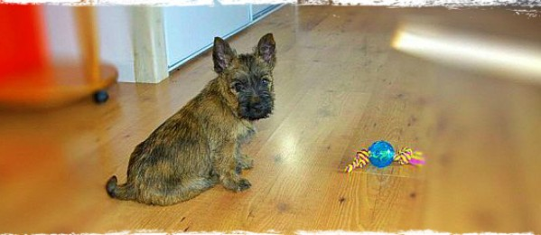 Why You Need To Train Your Puppy-Practical First Steps