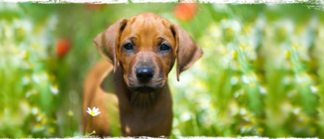 Tips For A Wagging Spring for Dogs- Infograph