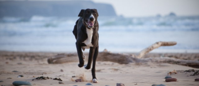 Eight Tips on How to Train a Hyperactive Dog to be Calmer