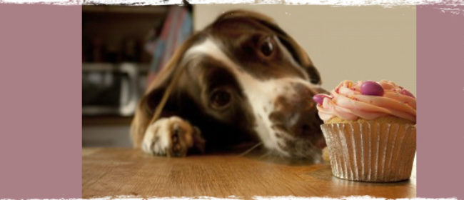 7 Human Foods Safe For Dogs