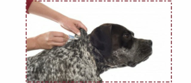 To Flea or Not To Flea... Dog Friendly Effective Flea Treatments