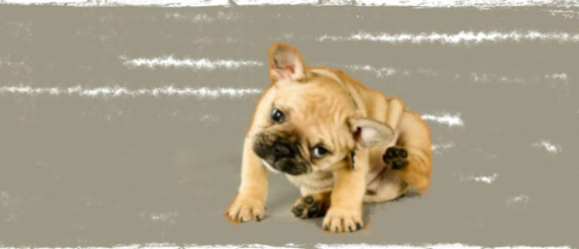 Quick Home Remedies For Various Pet Ailments