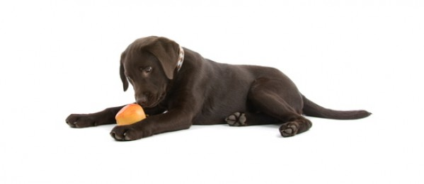 The Many Benefits Of Homemade Dog Food -Infograph