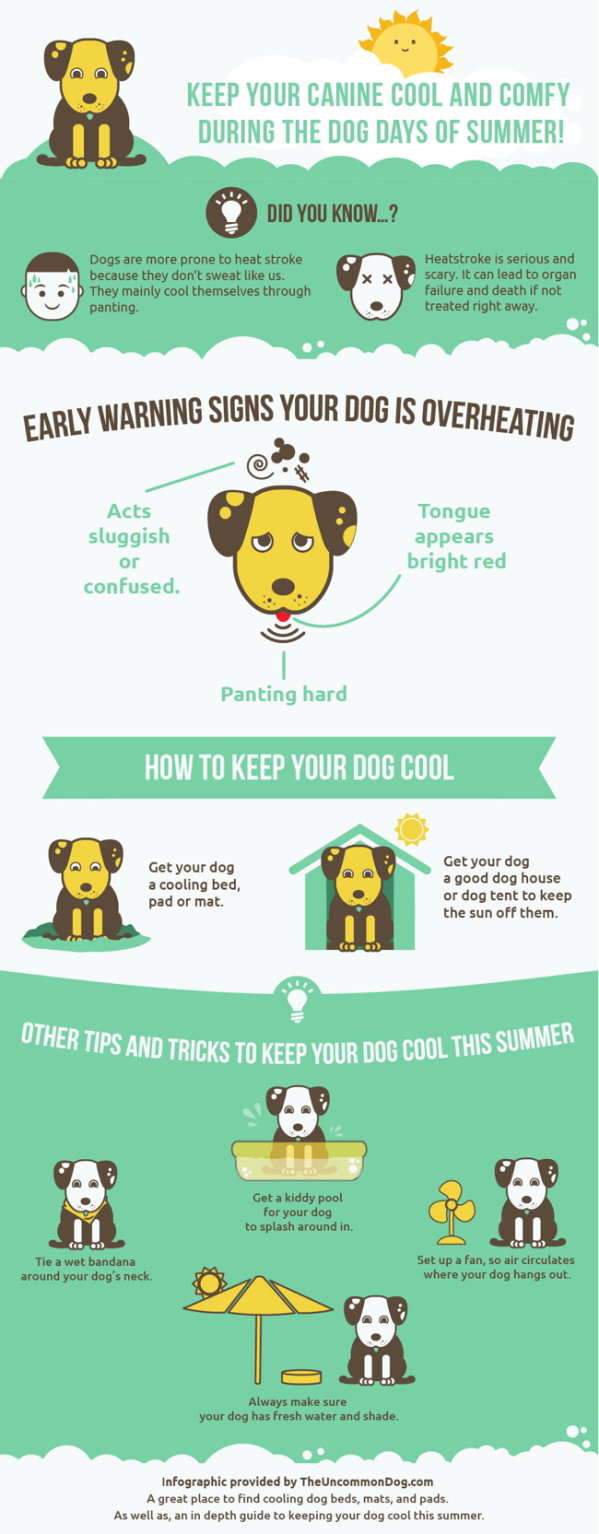 tips on keeping your dog cool