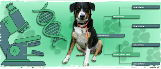 Dog DNA Testing: Breed Verification For Mongrels And Mutts