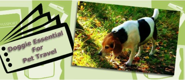 Traveling Abroad With A Dog Pet At Home