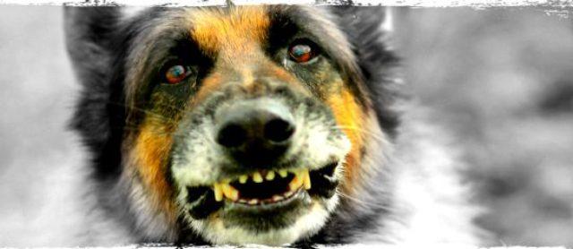 Understanding Dog Aggression