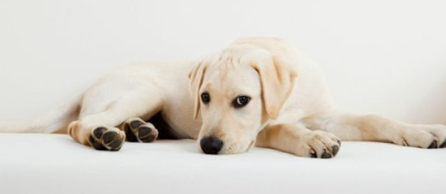 How To Keep Your Sofa Looking Fresh When You Have Pets