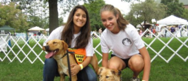 What to Look for in a Reputable Dog Rescue Organization