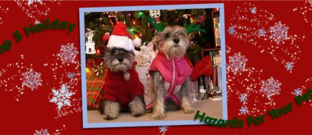 Top 5 Holiday Hazards For Your Pet