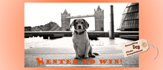 Check out our Wag N Go Travelling Dog Photo Contest