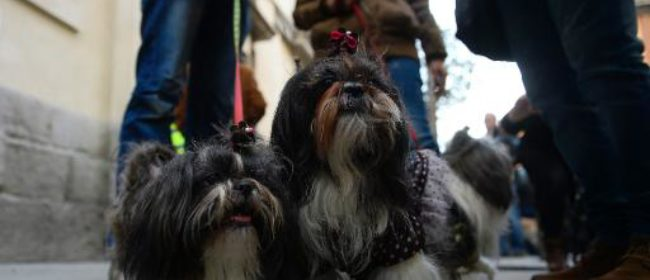 Spain town hires poo 'detective' to spy on dog owners