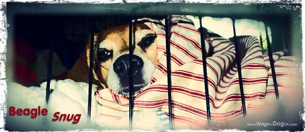 Sleeping Beagle Style - [Denning, Circles & Paw]