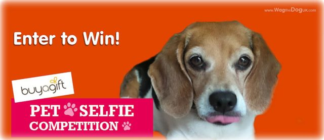 Buyagift's Next Pet Model Contest-Pet Wagging Selfie