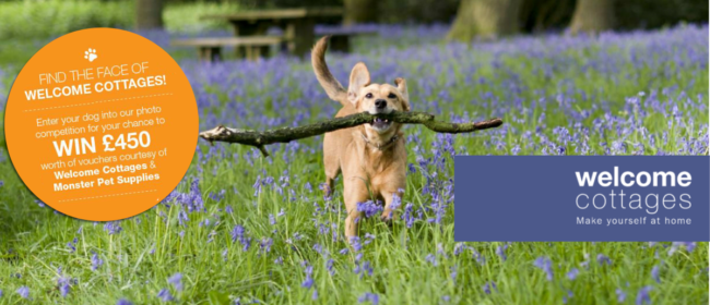 Welcome Cottages is Looking For A Wag N' Face Photo Competition