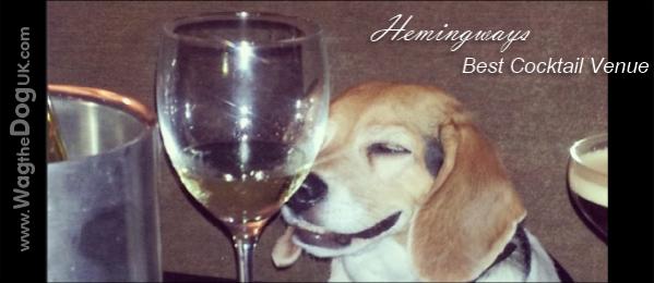 Best Dog Friendly Cocktail Venue- Please Vote!