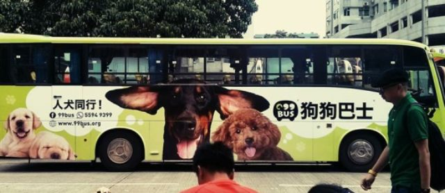Hong Kong Has A New Pet Bus For Dogs