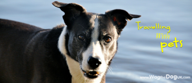 Valuable Tips For Travelling Pets