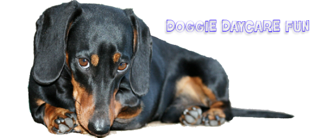 Why Doggie Daycare is Fun For Your Pooch