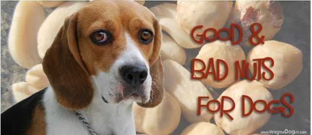 Good Nuts & Bad Nuts For Dogs -Know Your Nut & Why