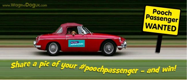 Pooch Passengers Wanted: Enter to Win & Help Manchester Dogs' Home