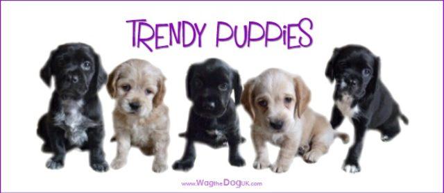 Top 15 Trendiest Puppies In The UK