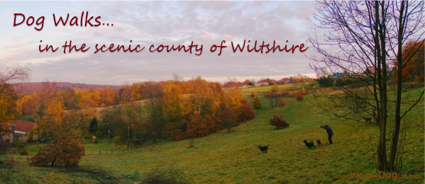 Dog Friendly Walks In Wiltshire