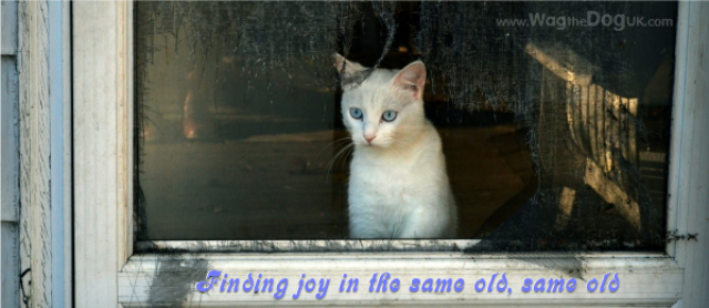 Finding joy in the same old, same old [A Pet Routine Tail]