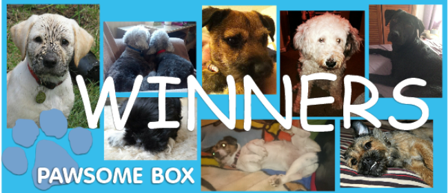 Our Pawsome Box Winners & Review