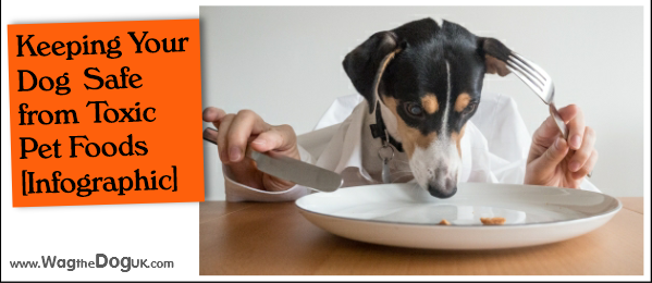 Keeping Your Dog Safe from Toxic Pet Foods [Infographic]